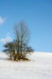 Övervintra landskapet, snö-korkade berg, träd på en bakgrundsnolla Arkivfoto
