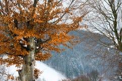 Övervintra landskapet, snöberg, träd på en bakgrund av blått Royaltyfri Bild