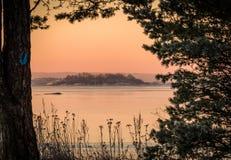 Övervintra landskapet som det rosa morgonljushavet sörjer igenom träd Fotografering för Bildbyråer