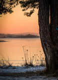 Övervintra landskapet som det rosa morgonljushavet sörjer igenom träd Arkivbild