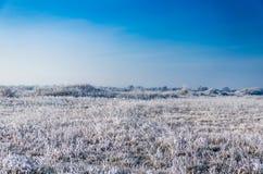 Övervintra landskapet, träd som täckas med snö på etttäckt fält Arkivbilder