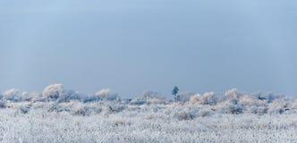 Övervintra landskapet, träd som täckas med snö på etttäckt fält Arkivfoton
