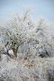 Övervintra landskapet, träd som täckas med snö på etttäckt fält Arkivbild