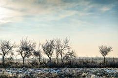 Övervintra landskapet, träd som täckas med snö på etttäckt fält Royaltyfri Bild