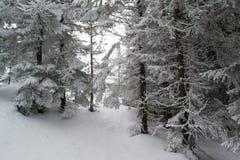 Övervintra landskapgranar och buskar i snön fotografering för bildbyråer