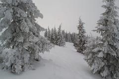 Övervintra landskapgranar och buskar i snön royaltyfri bild