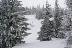 Övervintra landskapgranar och buskar i snön royaltyfri foto