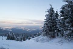 Övervintra landskapgranar och buskar i snön royaltyfria bilder