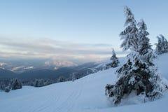 Övervintra landskapgranar och buskar i snön arkivbild
