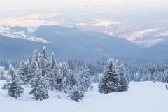 Övervintra landskapgranar och buskar i snön arkivfoto