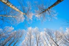 Övervintra naturbakgrund - trädfilialer i is på bakgrund för blå himmel arkivfoton