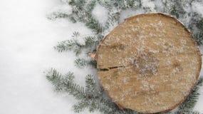 Övervintra ordningen av granträ och i snön Arkivfoton