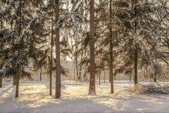 Övervintra platsen, träd och gran-träd i snön på solnedgången arkivbild