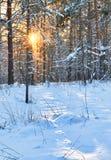 Övervintra skogen Arkivfoton