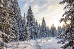 Övervintra skogen i solig dag Arkivbild