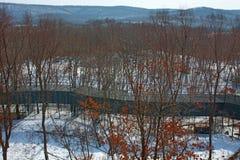 Övervintra skogen med höga broar för passagen av folk, parkera med djur och broar för folk arkivbild