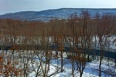 Övervintra skogen med höga broar för passagen av folk, parkera med djur och broar för folk royaltyfri fotografi