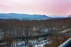 Övervintra skogen med höga broar för passagen av folk, parkera med djur och broar för folk royaltyfria bilder