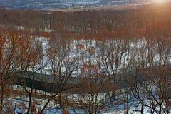 Övervintra skogen med höga broar för passagen av folk, parkera med djur och broar för folk arkivfoton