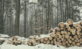 Övervintra skogen, mycket snö, snittträd royaltyfri fotografi