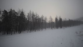 Övervintra skogen och sätta in stock video
