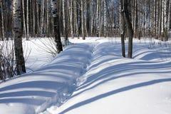 Övervintra skogen och snowdrifts Arkivfoto