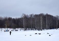 Övervintra, snöa, landskap, förkylning, skogen, trädet, naturen, is, himmel, frost, floden, sjön, träd, vatten, vit, säsongen som Arkivbilder