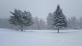 Övervintra snöfall på landskap med granen och sörja arkivfilmer