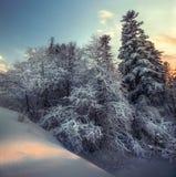 Snöig skog för vinter i kvadrera Fotografering för Bildbyråer