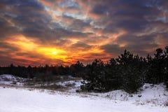 Övervintra soluppgång med brännheta himlar i pinjeskogen Royaltyfri Fotografi