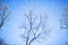 Övervintra träd med rimmet på fruncherna i den kalla dagen Arkivfoto