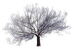 Övervintra trädet på den snö isolerade vita illustrationen 3D Arkivfoton