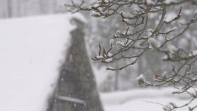 Övervintra trädet, snönedgång, i Toyama, Japan