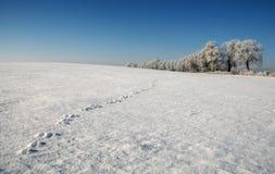 Övervintra trädet som täckas med frost på fältet Fotografering för Bildbyråer