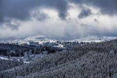 Övervintra trees i berg som täckas med ny snow Royaltyfria Foton