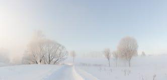 Övervintra trees som täckas nära med hoar på morgonen som tändas med sunligh Royaltyfri Bild