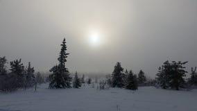 Övervintra underland, dimmig dag på hedmarksviddaen Norge Arkivfoton