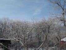 Övervintra vegetation som täckas med snö och som är solbelyst Arkivbilder