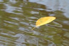Övervintrar guld- gula sidor för torra bladsidor som svävar på yttersidan, vågpölnaturen i skog, ny fred i naturen, vatten tillba arkivbild