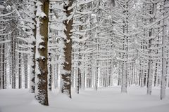 övervintrar karpaty berg för carpathian gran som skidar snowfalltreesturen ukraine Royaltyfria Foton
