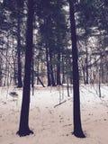 Övervintrar skogen arkivbild