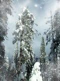 övervintrar snöig trees för blå klar granmorgonsky Fotografering för Bildbyråer