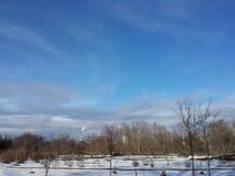 övervintrar trees för snow för sky för lies för frost för mörk dag för bluefilialer Arkivbild