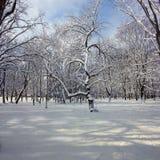 övervintrar trees för snow för sky för lies för frost för mörk dag för bluefilialer Royaltyfria Bilder