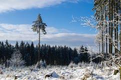 övervintrar trees för snow för sky för lies för frost för mörk dag för bluefilialer Arkivfoto