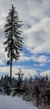 övervintrar trees för snow för sky för lies för frost för mörk dag för bluefilialer Arkivbilder