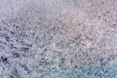 övervintrar trees för snow för sky för lies för frost för mörk dag för bluefilialer Royaltyfri Fotografi
