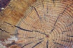 Övre avsnitt för av en trädstam Royaltyfria Foton