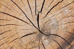 Övre avsnitt för av en trädstam Arkivbild