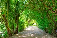Övre bild för slut av den härliga tropiska trädgården Arkivfoton